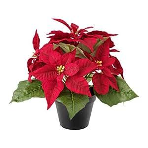 Flor de Pascua Planta Natural Pequeña Con Flor En Maceta - Planta Decorativa y Ornamental