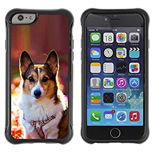 SHIMIN CAO@ Corgi Rembroke Welsh Cardigan Dog Rugged Hybrid Armor Slim Protection Case Cover Shell For iPhone 6 Plus CASE Cover ,iphone 6 5.5 case,iPhone 6 Plus cover ,Cases for iPhone 6 Plus 5.5