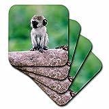 3dRose cst_73532_2 Tanzania, Ngorogoro Crate, Wild Vervet Monkey Baby-Af45 Bja0006-Janyes Gallery-Soft Coasters, Set of 8