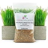 FARMERLY Las Semillas orgánicas: Orgánica de Semillas de Pasto, Semillas de Hierba Gato, 16 Ounces- 100% orgánicos no GMO