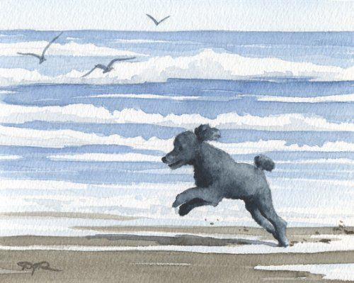 Black Poodle At the Beach Art Print By Watercolor Artist DJ Rogers