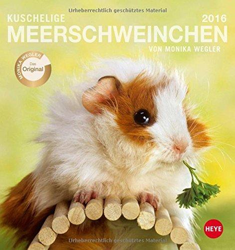 Meerschweinchen Postkartenkalender 2016