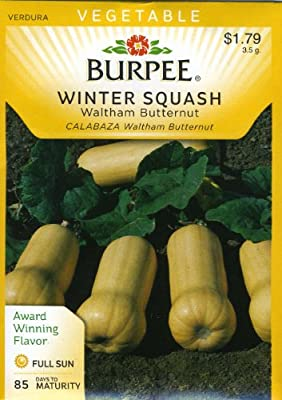 Burpee 53399 Squash, Winter Waltham Butternut Seed Packet