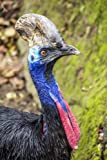 A Profile of a Bright and Colorful Cassowary: Blank 150 page lined journal for your thoughts, ideas, and inspiration