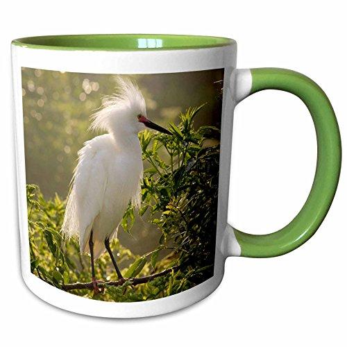 3dRose Danita Delimont - Birds - Snowy Egret bird, Alligator Farm, St. Augustine, FL - US10 MPR0261 - Maresa Pryor - 11oz Two-Tone Green Mug - Augustine Outlet Fl St