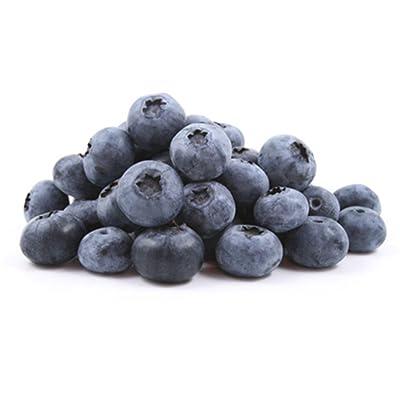Blueberry Seeds 100Pcs Fruit Seeds for Bonsai Interior Available Outdoor : Garden & Outdoor