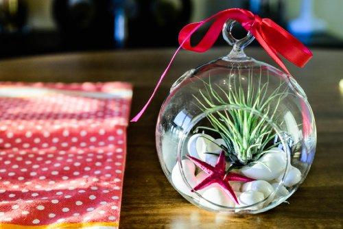 Hinterland Trading Mother's Day Air Plant Tillandsia Pink Starfish and Seashell Glass Terrarium Kit