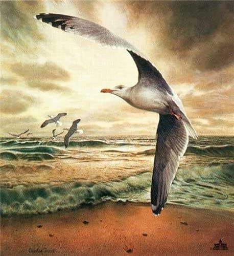 Amazon Com Charles Frace Herring Gull Signed Open Edition On Paper Posters Prints Découvrons les plus beaux lieux de france à visiter, pour vos week end ou vacances. herring gull signed open edition on