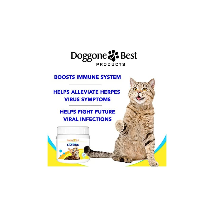 Lysine for Cats Best L lysine Powder Supplement Human Grade All Natural Immune System Support Helps Maintain Eye & Respiratory Health 900mg Per Serving 8oz Made in the USA