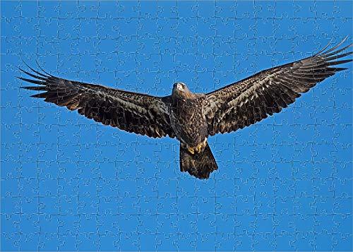 Media Storehouse 252 Piece Puzzle of Juvenile American Bald Eagle (15380069)
