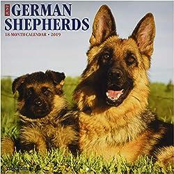 Just German Shepherds 2019 Wall Calendar (Dog Breed Calendar)