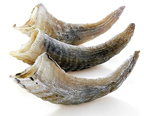 """Icelandic+ Small Lamb Horn Dog Treat 5"""" (0.55-1.05 oz) (3 Pack of Small Size Horns)"""
