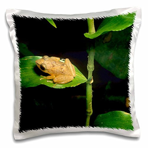 3dRose Coqui frog on leaf, El Yunque Forest, Puerto Rico.-CA27 KSC0000 - Kevin Schafer - Pillow Case, 16 by 16-inch - Coqui Frog