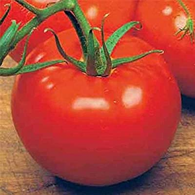 Tomato Garden Seeds - Ace 55 VF - Non-GMO, Heirloom Vegetable Gardening Seed