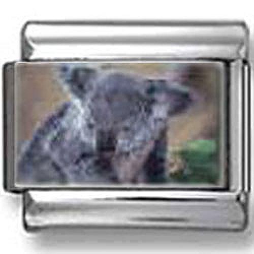Koala photo Italian charm
