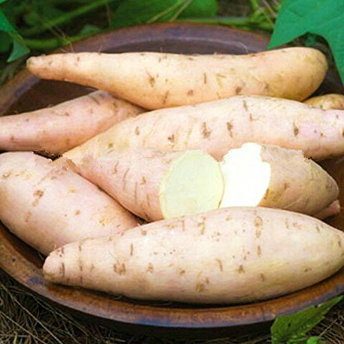Giant Sweet Potato Seeds Health Anti-wrinkle Nutrition Green Vegetable Seed For Home Garden 50pcs/bag SVI