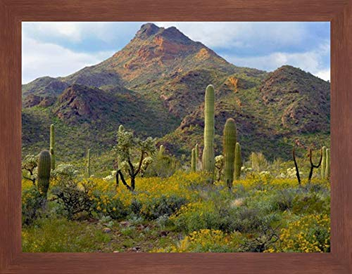 (Saguaro and Teddybear Cholla amid Flowering Lupine and California Brittlebush by Tim Fitzharris - 22