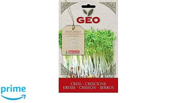 Geo Berros Semillas para germinar, Marrón, 12.7x0.7x20 cm: Amazon.es: Jardín