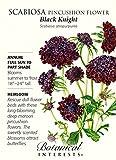 Black Knight Pincushion Scabiosa Flower - 30 Seeds