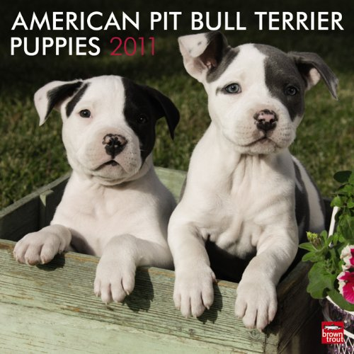 American Pit Bull Terrier Puppies 2011 SQR (Multilingual Edition)