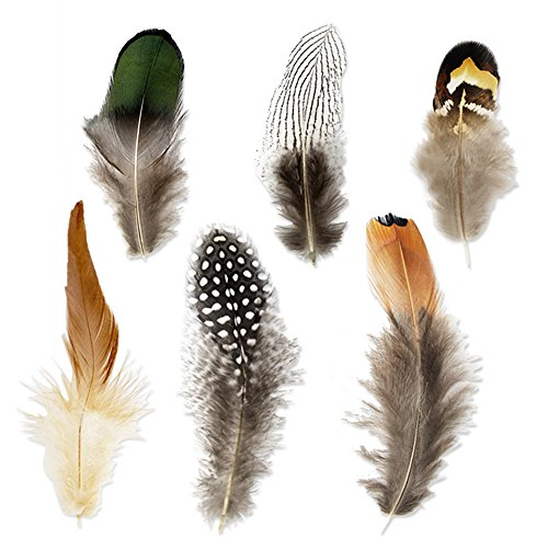 Coceca 180pcs 6 Styled Feathers Assorted Mixed Feathers for Dream Catcher Crafts -