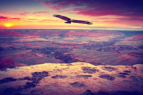 Eagle Flying Over Grand Canyon National Park Photo Art Print Poster 36x24 inch