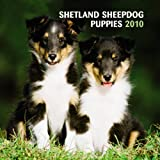 Shetland Sheepdog Puppies 2010 Mini Wall