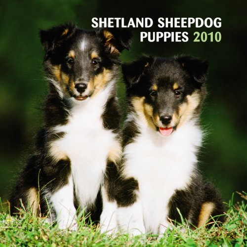Mini Calendar 2010 Dog - Shetland Sheepdog Puppies 2010 Mini Wall