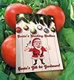 buy Homegrown Tomato Seeds, 300, Rutgers Tomato now, new 2020-2019 bestseller, review and Photo, best price $5.69