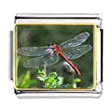 GiftJewelryShop Gold Plated Beautiful Lovely Dragonfly Bracelet Link Photo Italian Charms