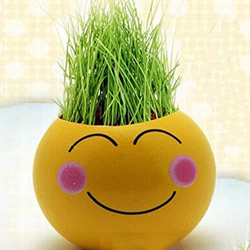 Head Planter - 1 macetero de cerámica para plantar hierbas ...