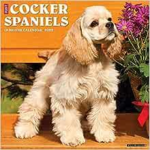 "Willow Creek Just Cocker Spaniels 2021 Wall Calendar 12/""X12/"""