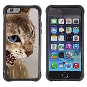 Suave TPU GEL Carcasa Funda Silicona Blando Estuche Caso de protección (para) Apple Iphone 6 PLUS 5.5 / CECELL Phone case / / Cat Blue Eyes Brown White Angry Teeth /