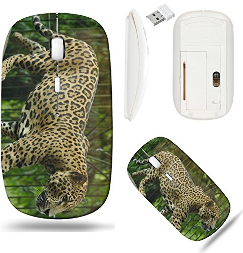 (Liili Wireless Mouse White Base Travel 2.4G Wireless Mice with USB Receiver, Click with 1000 DPI for notebook, pc, laptop, computer, mac book IMAGE ID: 17377138 La Paz Waterfall Gardens)