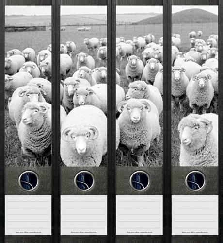 File Art AJ049 Design Etiketten Ordnerrückenschilder