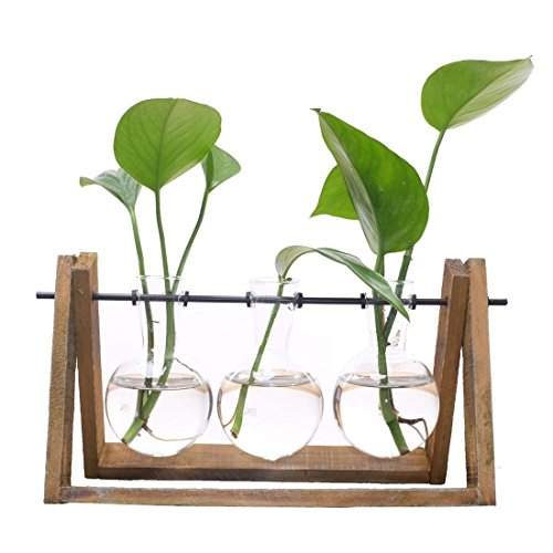 Lam Vase - Christmas Tabletop - Plant Terrarium With Wooden Stand Glass Vase Holder Scindapsus Container 3 Terrariums - Glass Vase Terrarium Flower Stand Wooden Vase Glass Terrarium Plant Holder Black Lam