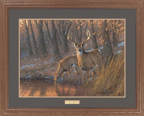 Woodland Waterhole - Whitetail Deer GNA Premium Framed Print by Michael Sieve