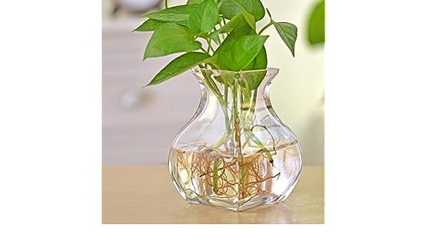 Tung Chi Vase STORE florero Vidrio esférico La pecera hidropónico florero de Cristal florero Floral Simple y Moderna-A: Amazon.es: Hogar