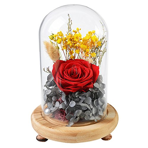 FORUSKY Beauty And The Beast Preserved Fresh Flower Glass Immortal Rose Flower Gift for Mother's Day Lover Birthday,Anniversary Gifts,Valentines Gifts,Wedding Anniversary Gift - Red