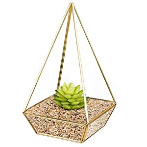 HOMEIDEAS Modern Clear Glass Pyramid Tabletop Geometric Polyhedron Terrarium Box,Decorative Succulent Plants Holder 6 x 10 x 6 Inches(Golden)