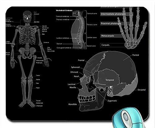 Arte calaveras ciencia medicina anatomía grises huesos 1280 x 1024 ...