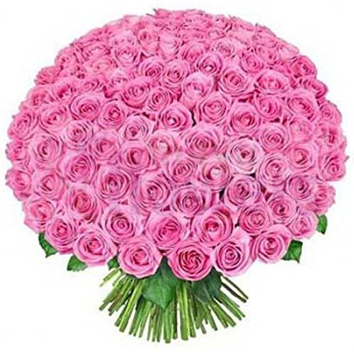 4ba3d73e32ac FloraZone Gorgeous Fresh Flowers Pink Bouquet (Bunch of 200 Pink Roses)  Same Day Delivery  Amazon.in  Home   Kitchen