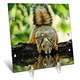 3dRose Danita Delimont - Squirrels - Eastern Fox Squirrel, adult drinking, Hill Country, Texas - 6x6 Desk Clock (dc_279529_1)