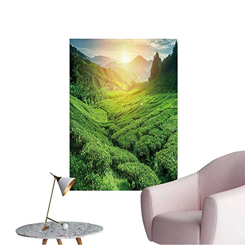 Wall Stickers for Living Room Tea Plantation in Sunset time Nature Background Vinyl Wall Stickers Print,12