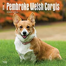 Pembroke Welsh Corgis 2018 12 x 12 Inch Monthly Square Wall Calendar, Animals Dog Breeds (Multilingual Edition)