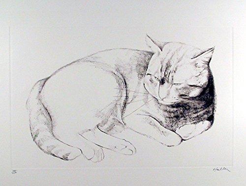 Basking Cat (Basking Cat)