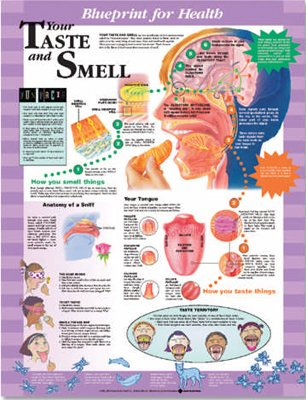 Amazon blueprint for health your taste and smell chart paper blueprint for health your taste and smell chart paper malvernweather Gallery