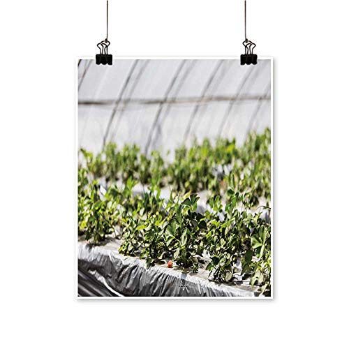 Modern Painting Greenhouse Grow Strawberries Increase Income for Farmers Artwork for Home Decorations,16