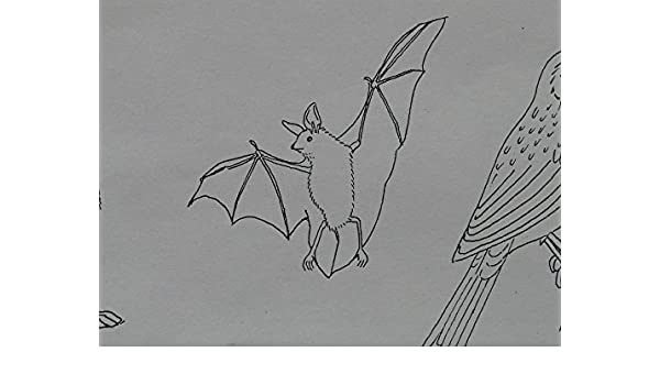 Amazon com: Peel-n-Stick Poster of Coloring Pages Bat Animal Sign