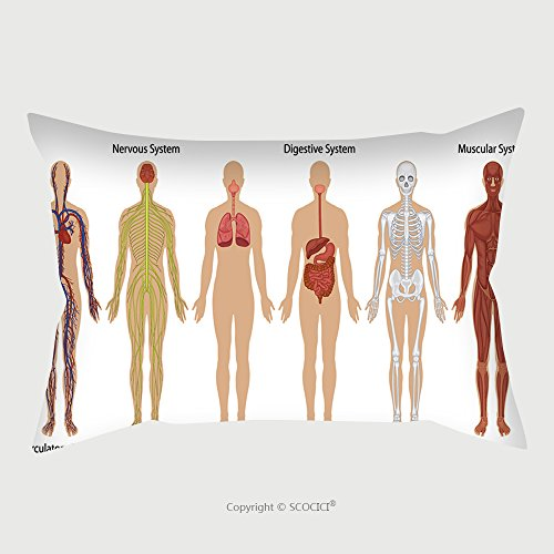 Custom Satin Pillowcase Protector Illustration Of The Human Body Systems 102046420 Pillow Case Covers Decorative by chaoran